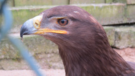 IMG_2805 Vogelparkklein